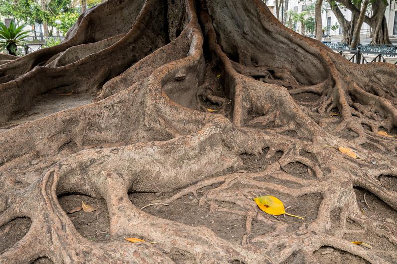 Le baobab – Carapaces I Stratégies & Conformités